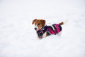 Dog dressed in warm jacket winter fashion season 2017 Royalty Free Stock Photo
