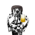 Dog drinks beer Royalty Free Stock Photo