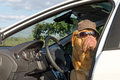Dog driver Royalty Free Stock Photo