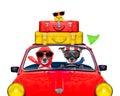 Royalty Free Stock Image Dog driving a car