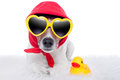 Dog and duck wearing a scarf with yellow sunglasses a yellow rubber Stock Images