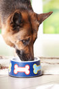 Dog eating from bowl Stock Photo