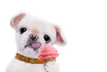 Dog eats ice cream. Royalty Free Stock Photo