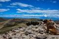 Dog enjoying gorgeous landscape of isla del sol bolivia Royalty Free Stock Images