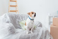 Dog enjoying his new house Royalty Free Stock Photo
