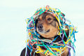 Dog entangled in colorful serpentine