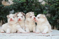 dog family Royalty Free Stock Photo