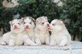 dog family Royalty Free Stock Photo