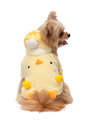 Dog in fancy dress cute mixed breed isolated white background with clipping path Stock Images
