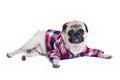Dog fashion Royalty Free Stock Photo