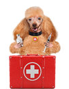 Dog with a first aid kit Royalty Free Stock Photos
