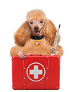 Dog with a first aid kit Stock Photography