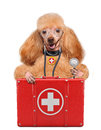 Dog with a first aid kit Stock Photo
