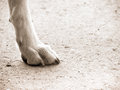 Dog foot one close up Stock Photo