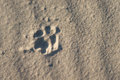 Dog foot print in the sand Royalty Free Stock Photo