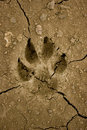 Dog footprint Royalty Free Stock Image