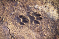 Dog footprint dry cracked soil Stock Image