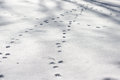 Dog footprints at the snow in winter Stock Photo