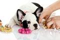 Dog French Bulldog Isolated On...