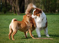 Dog friendship Royalty Free Stock Photos