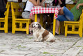 Dog in front of restaurant table cute sitting outdoor and waiting his owner Royalty Free Stock Photography