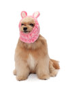 Dog in funny hat cute mixed breed isolated white background with clipping path Royalty Free Stock Images
