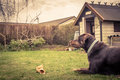 Dog in a garden with a bone