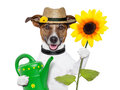 Dog gardener Royalty Free Stock Photos