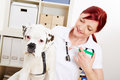 Dog getting immunization from boxer veterinarian with a syringe Royalty Free Stock Photo