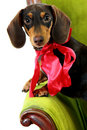 Dog gift Stock Photo