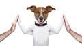 Dog high five Royalty Free Stock Photo