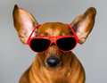 Dog and glasses Royalty Free Stock Photos