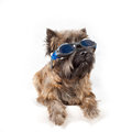 Dog with glasses portrait on white. Royalty Free Stock Photo