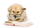 Dog in glasses read book looking at camera isolated on white b Royalty Free Stock Photos