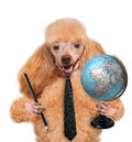 Dog with globe Royalty Free Stock Photography