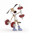 Dog going in for sports lifting dumbbells you strengthen the health Stock Photos