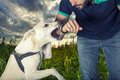 A dog is going to bite a man Royalty Free Stock Photo