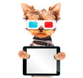 Dog going to the movies with tablet pc isolated and holding a blank Stock Photography