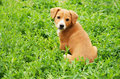 Dog in grass Stock Images