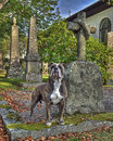 A dog with the grave and guarding his masters grave in hdr faithful stand at master s Stock Photos