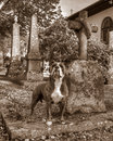 A dog with the grave and guarding his masters grave in hdr and retro style faithful stand at vintage church is built completely Royalty Free Stock Photos