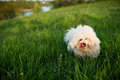 Dog on green grass white field Royalty Free Stock Photography