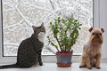 Dog and grey cat on the window sitting in through glass winter snow Stock Photo