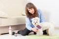 Dog grooming at home smiling woman a purebreed maltese on the floor Stock Images
