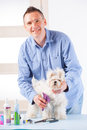 Dog grooming smiling man a purebreed maltese Royalty Free Stock Images