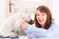 Dog grooming smiling woman a purebred maltese Royalty Free Stock Photography