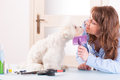 Dog grooming smiling woman a purebreed maltese Royalty Free Stock Image