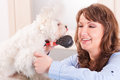Dog grooming smiling woman a purebreed maltese Royalty Free Stock Images
