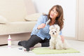 Dog grooming smiling woman a purebreed maltese Stock Photos