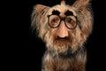 Dog with groucho marx glasses